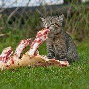 Cibo naturale per gatto