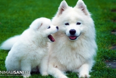 Razze di cani (canidi)