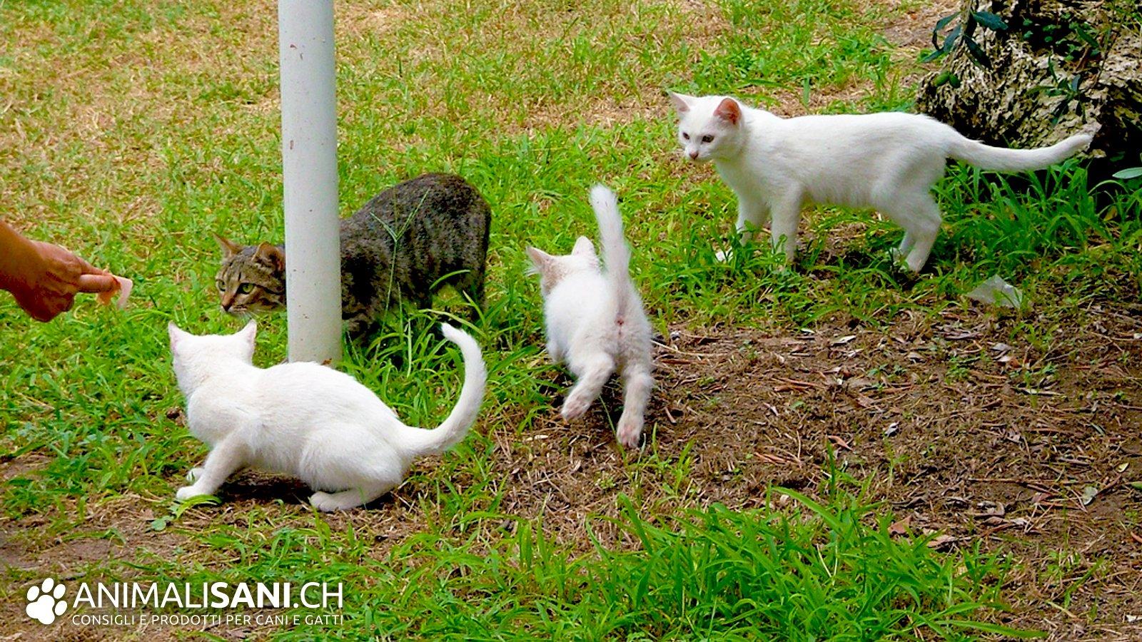 Principi nutritivi di cui ha bisogno il gatto for Cosa mangia il gatto