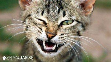 Gatto che fa l'occhiolino