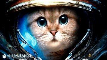 Gatto spaziale