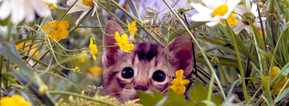 Gattino nascosto tra i fiori