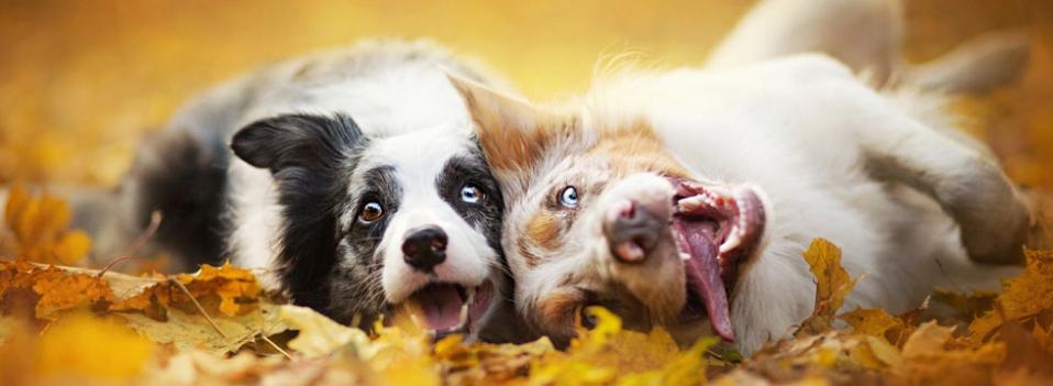 Cani giocherelloni