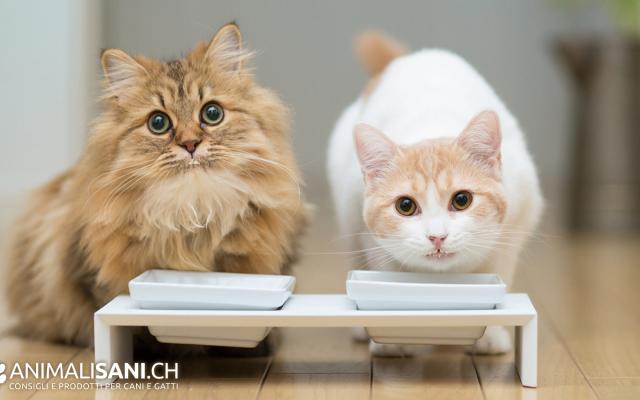 Cambio alimentazione del gatto