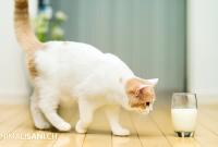 Sostanze tossiche e nocive per il gatto